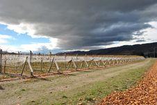 Free Vineyard In New Zealand Royalty Free Stock Photo - 14451165