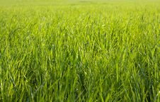Free Green Grass On A Sunny Day Stock Photo - 14453080