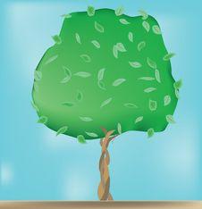 Free Alone Growing Tree Stock Photos - 14453643