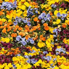 Free Carpent From Some Colour Flowers Royalty Free Stock Image - 14453926