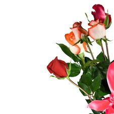 Free Rose Royalty Free Stock Photography - 14454137