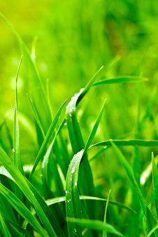 Free Wild Plant Royalty Free Stock Photos - 14454468