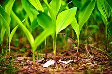 Free Wild Plant Stock Photo - 14455460