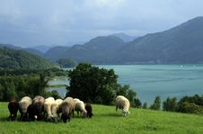 Free Landscape With Sheeps, Lake And Mountains Royalty Free Stock Photos - 14455468
