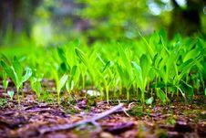 Free Wild Plant Stock Image - 14455841