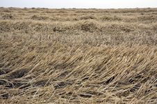 Free Landscape With Rural Field Royalty Free Stock Photography - 14455857