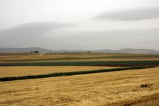 Free Landscape With Rural Field Royalty Free Stock Photos - 14455898