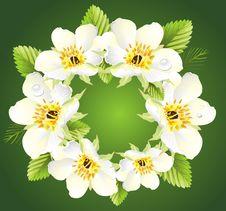 Free Floral Design Stock Photo - 14456100
