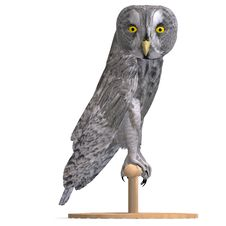 Free Grey Owl Bird. 3D Rendering With Clipping Path Royalty Free Stock Photos - 14457068
