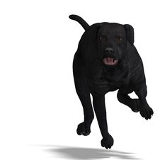 Free Labrador Retriever Dog. 3D Rendering With Royalty Free Stock Photos - 14457078
