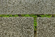 Closeup Of Pavement Stones Royalty Free Stock Photo