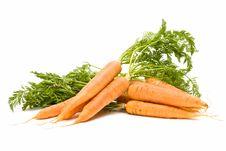 Very Fresh Carrots Royalty Free Stock Photos