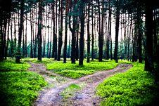 Free Trees Royalty Free Stock Image - 14457646