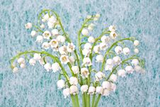 Free Lilly Of The Valley Stock Photography - 14458502