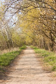 Forest Walking Path Royalty Free Stock Photos