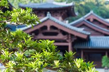 Free Chi Lin Nunnery, Hong Kong. Stock Photo - 14459430