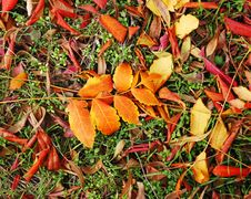 Free Autumn Leaves Royalty Free Stock Images - 14459739