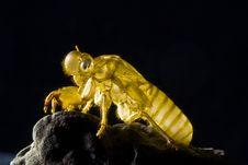 Free Skin Of Cicada Royalty Free Stock Photo - 14459775