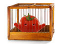 Free Tomato, Prisoner In The Cage. Royalty Free Stock Photography - 14460147