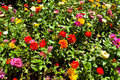 Free Variety Flower Royalty Free Stock Image - 14460486