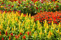 Free Variety Flower Royalty Free Stock Image - 14461106