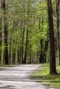 Free Scenic Walk Way Royalty Free Stock Image - 14463716