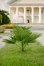 Free Palm In Foreground Of Palace Royalty Free Stock Photos - 14469888