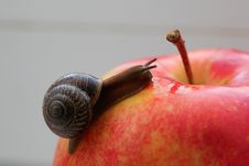 Free Snail Stock Photography - 14460542