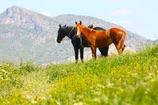 Free Black And Red Horses In The Mountains Royalty Free Stock Photos - 14460678
