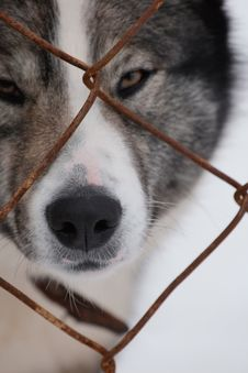 Free Dog Stock Photos - 14460753