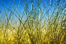 Free Grass Stock Photos - 14460823