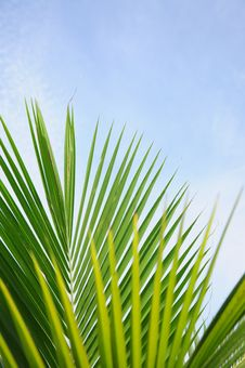 Free Tropical Palm Leaves Royalty Free Stock Photos - 14461188