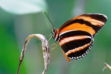 Free Appealing Butterfly On A Plant Royalty Free Stock Photography - 14461317