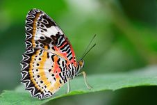 Free Appealing Butterfly On A Leaf Stock Images - 14461374