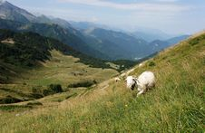 Free Appealing Point Of View In Pyrenean Smountain Royalty Free Stock Image - 14461406