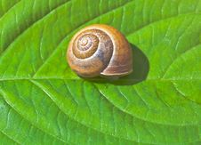 Free Garden Snail On A Leaf Royalty Free Stock Images - 14461829