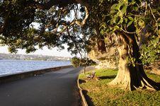 Free Sydney Botanic Garden, Australia Royalty Free Stock Images - 14462059