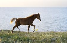 Free Horse Royalty Free Stock Photography - 14463607