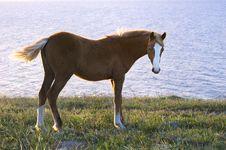 Free Horse Royalty Free Stock Photo - 14463645