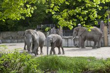 Free Elephants Royalty Free Stock Photo - 14463695