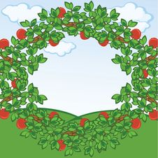 Free Apples Frame Stock Image - 14463881