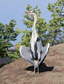 Free Heron Neck Stock Photos - 14463963