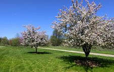 Free Spring Scene Royalty Free Stock Photography - 14464087