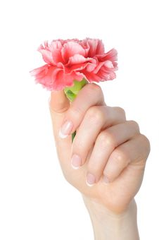 Free Beautiful Hand, Perfect French Manicure, Flower Stock Images - 14464354