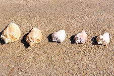 Free Sea Cockleshells On Sand Royalty Free Stock Images - 14464639