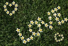 Free Flowers On A Grass Lay Out A Word Love! Royalty Free Stock Images - 14464789