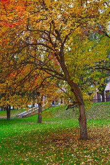 Free Autumn Park Royalty Free Stock Image - 14465906