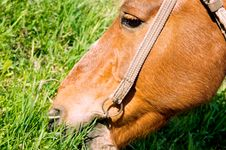 Free Horse Stock Photography - 14466862