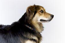 Free Dog Side Profile Stock Photo - 14467210