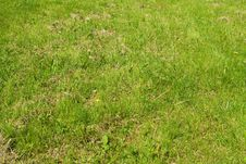 Free The Grass In The Meadow Royalty Free Stock Images - 14467339